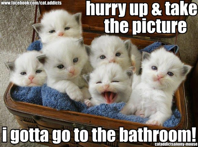 As Cute This Basket Of Six White Kittens It Is The Caption That Made Me Smile Hurry Up Take Picture I Gotta Go To Bathroom