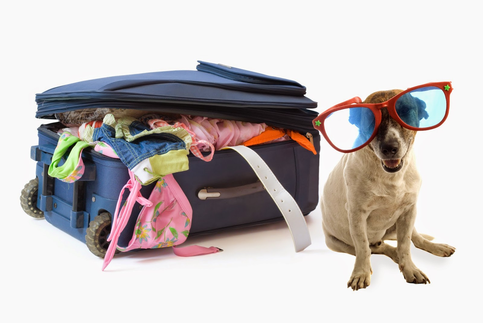 Board of holiday travel with your pet