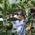 Blusukan di Perkebunan Batu, Gus Ipul Dorong Pertanian Organik di Jatim Lebih Maju