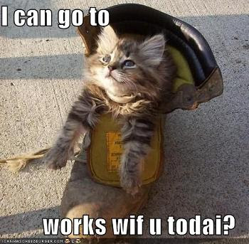 funny-pictures-kitten-wants-to-go-to-work-with-you.jpg