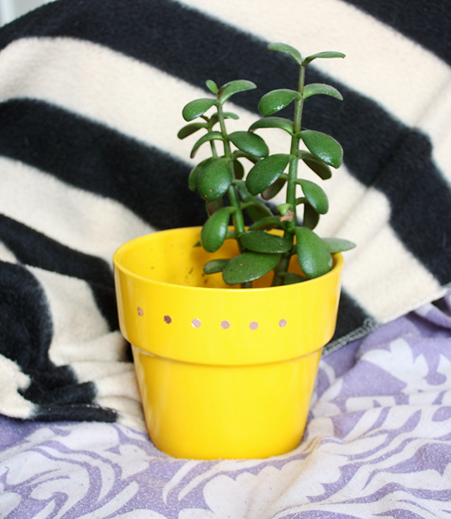 jade plant in yellow plant pot with diy copper dots