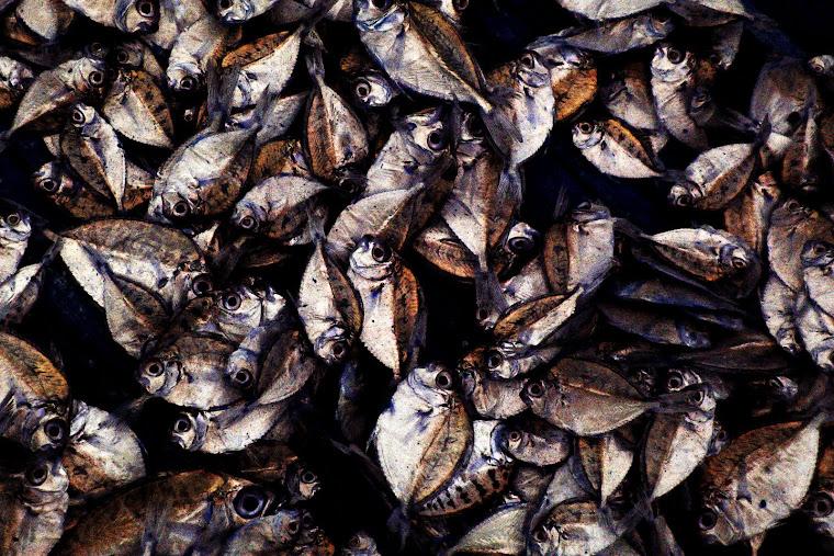 Keluarga Ikan. 2008