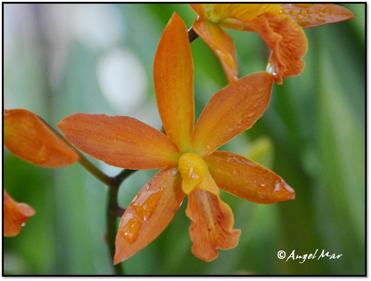 Orquídeas Blog de Angel Mar: junio 2013