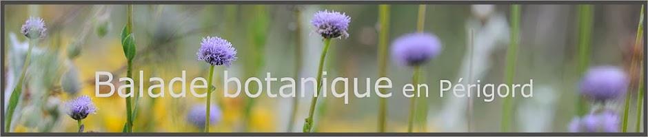 balade botanique