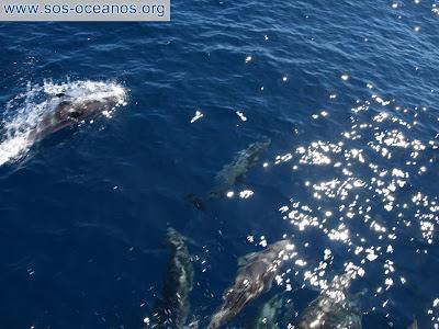 ¿Pueden los delfines beneficiarse de las matematicas no lineales cuando procesan las señales de su sonar ?