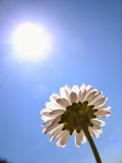 http://www.sxc.hu/photo/531444