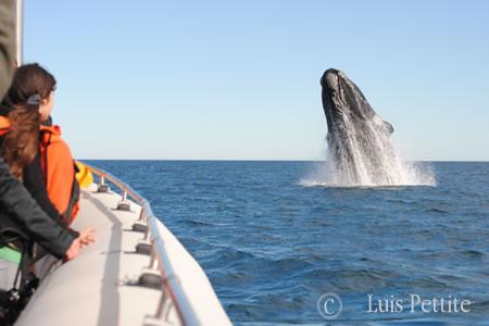 Whale Watching Peninsula Valdes Patagonia Argentina