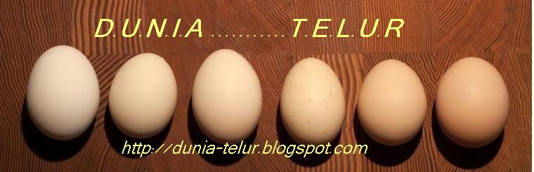 Semua Informasi Tentang Telur