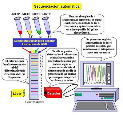 Pedro aviles unidad 4 for En 2003 se completo la secuenciacion del humano