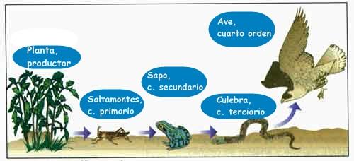 Desierto de Tabernas : CADENAS Y REDES TRÓFICAS