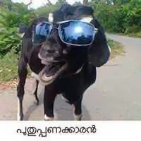 puthupanakkaaran - goat with sunglass Funny photo comment