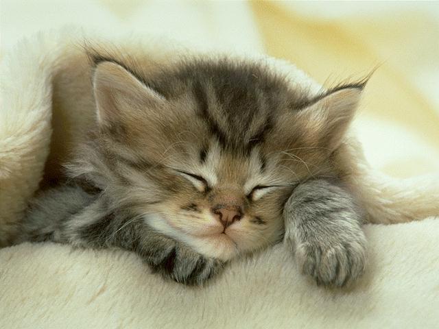 gamba kucing tidur lucu
