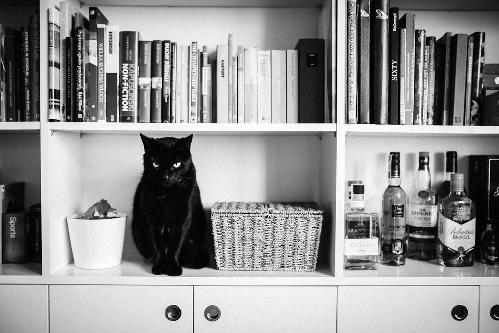 czarny kot na półce z książkami