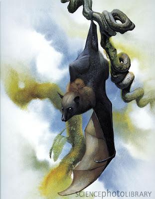 Large Palau flying fox