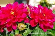 Fiori e colore: è primavera! (fiori )