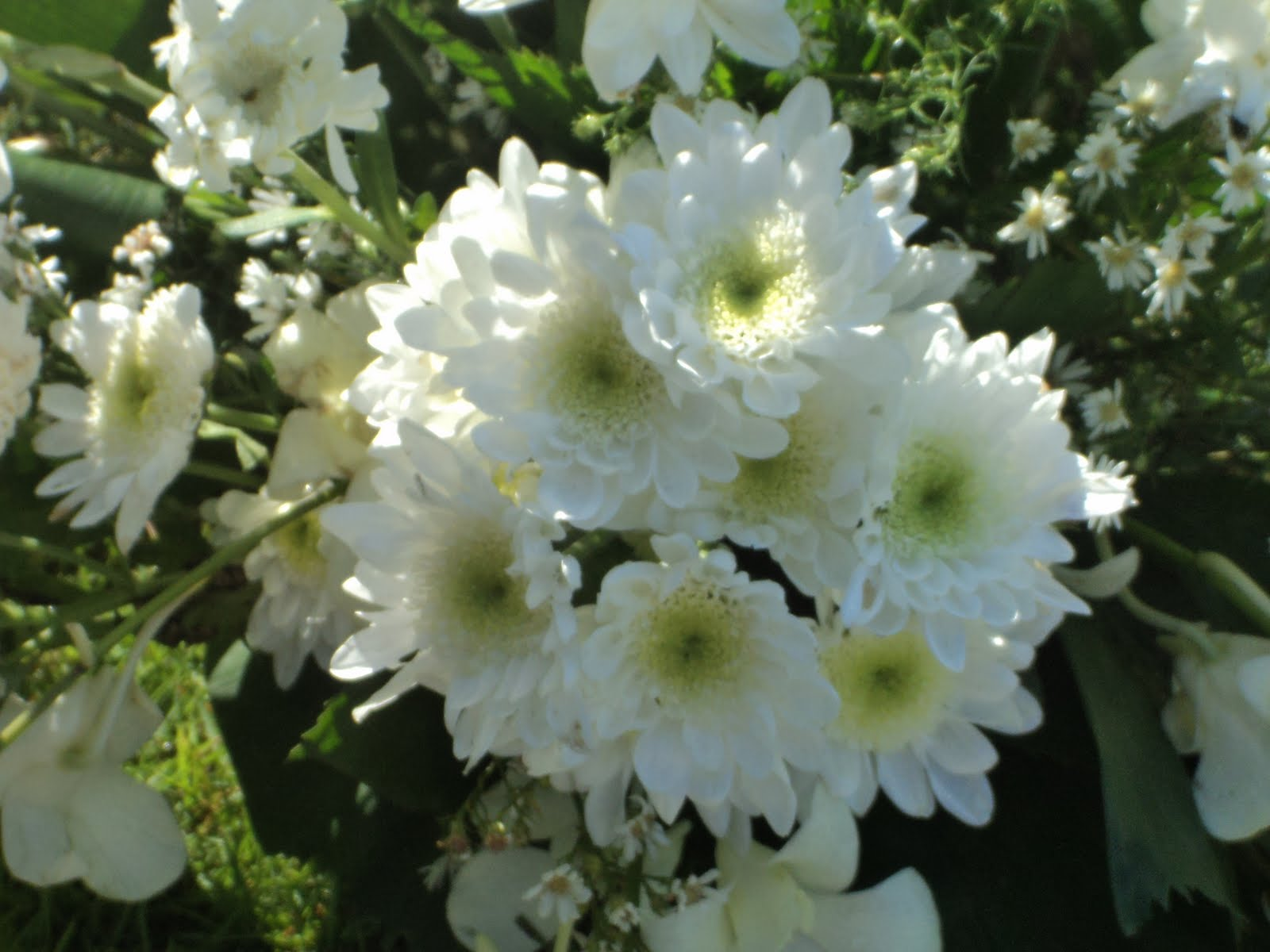 Day By Day With Divine Wednesday Whites Flowers For My Papa