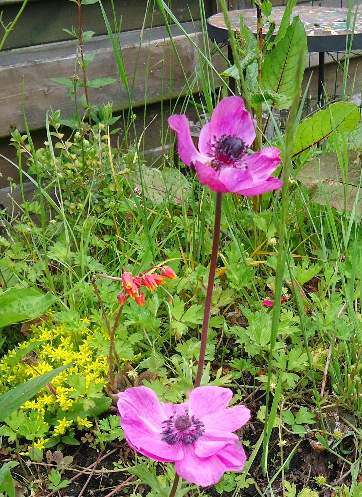 Het roze waterpaardje tuin tafeltje opknappen for Tuin opknappen
