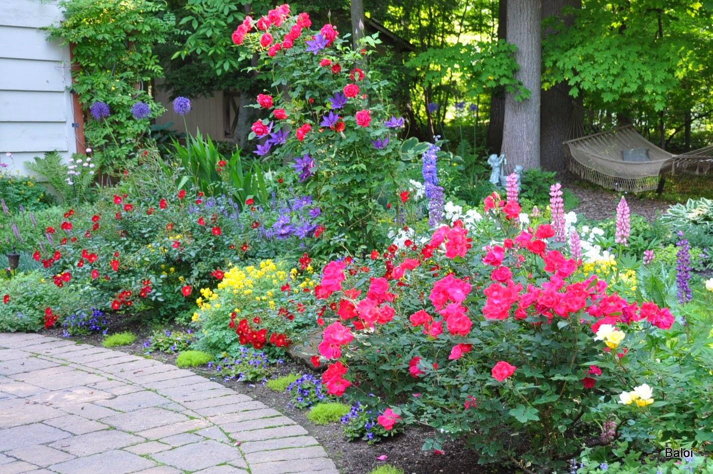 фото цветы в благодарность