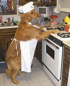 dog is a cooker