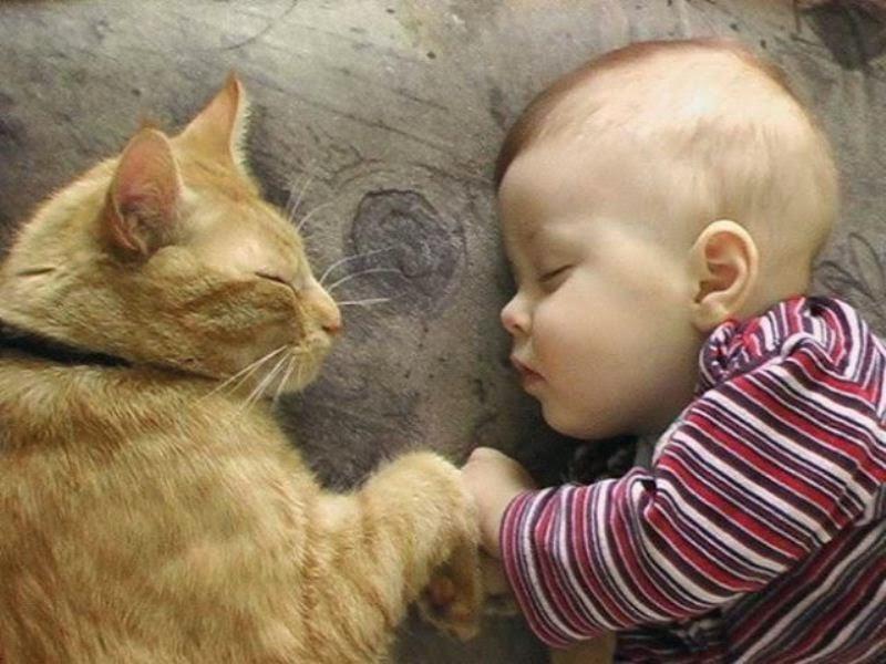 Foto bayi lucu dan kucing kesayangannya