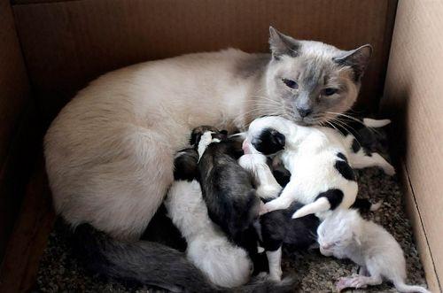Kucing jaga anak hamster