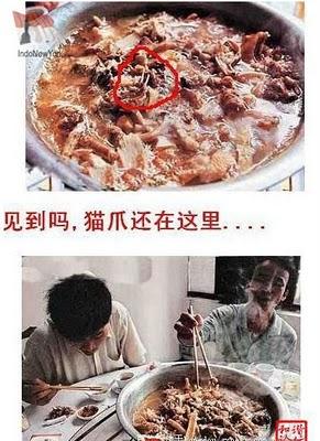 Proses Penyajian Sup Kucing Yang Kejam Di Resto China