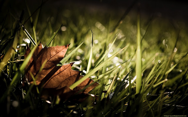 grass high definition wallpaper
