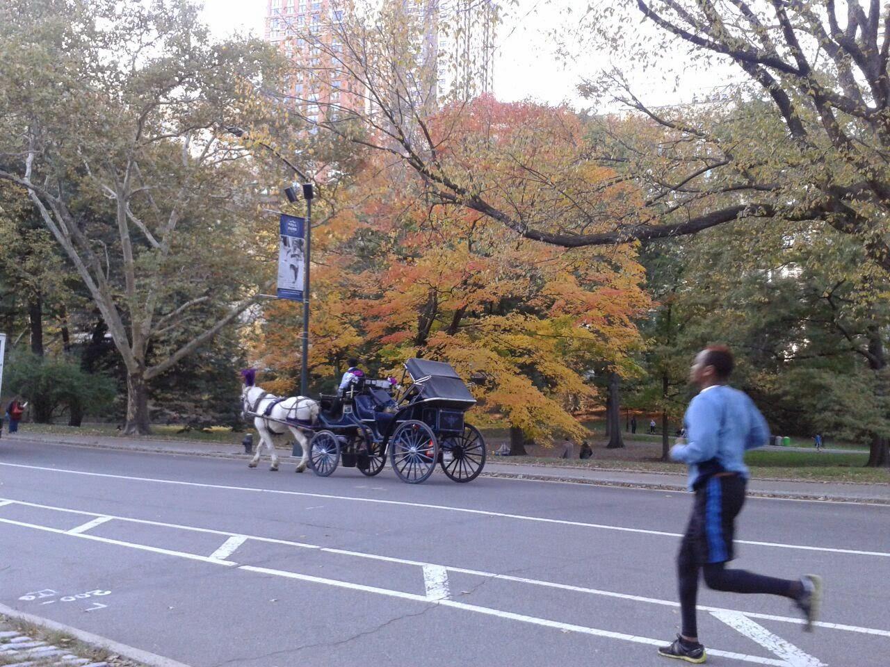 imagen de Carruajes de Central Park durante el otoño