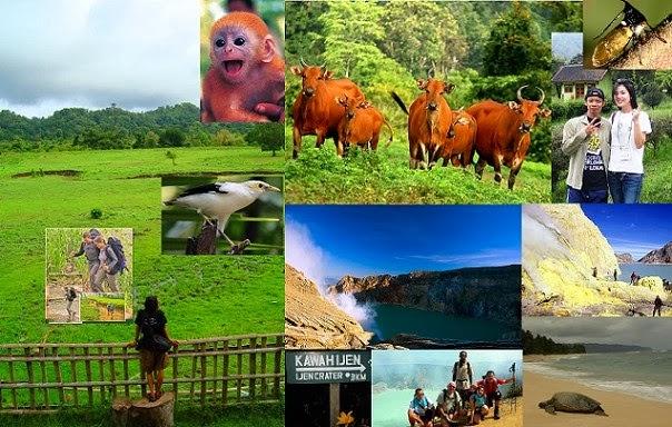 Ijen Crater, Alas Purwo, Sukamade at Meru Betiri, Kalibaru village and Malang 6 Days 5 Nights Tour