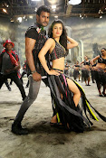 Pooja movie photos gallery-thumbnail-12
