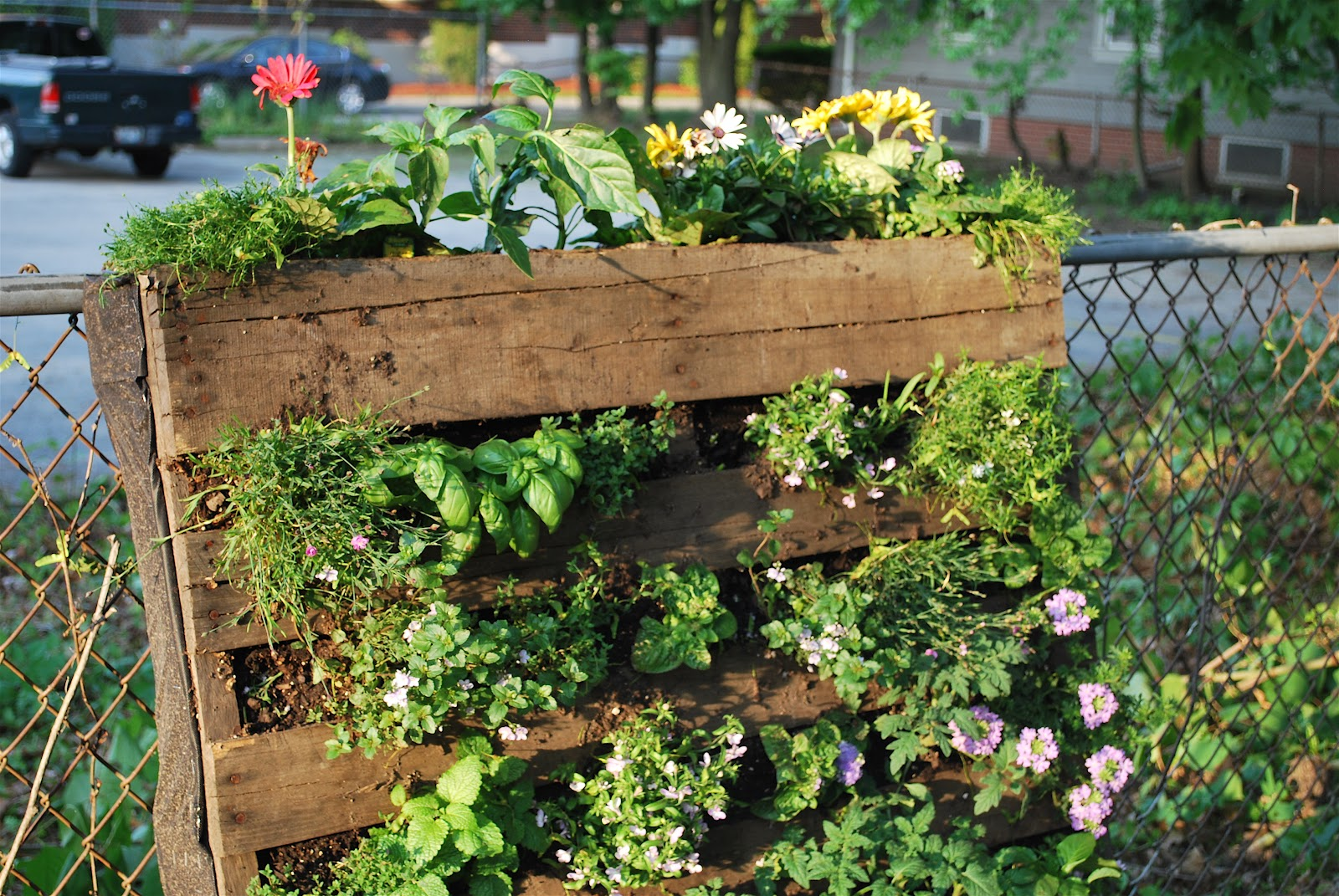 We Are Gardening Amateurs, But I Am Super Proud Of Our Little Pallet Garden.  (Thanks Pinterest People For All Of The Inspiration!)