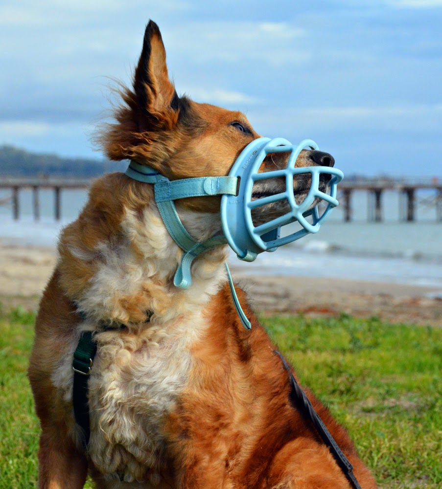The Dog Geek Product Review Baskerville Ultra Muzzle