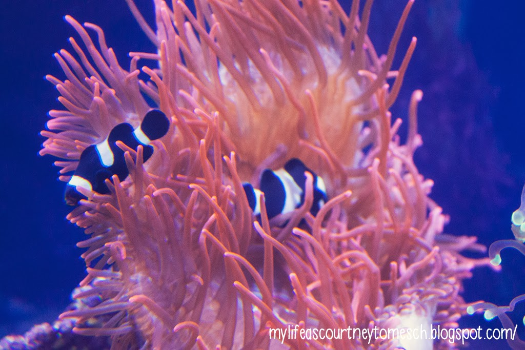 Oahu Hawaii Waikiki Aquarium