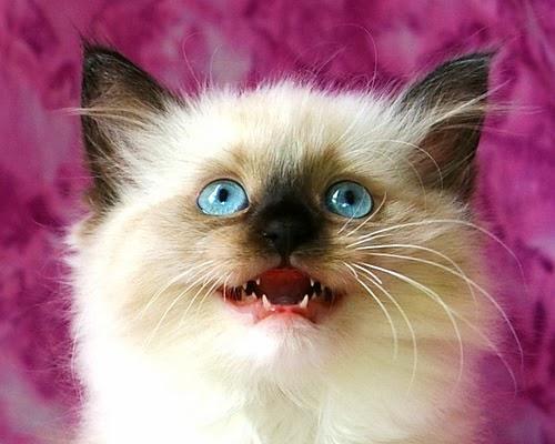 Surprised cat happy.