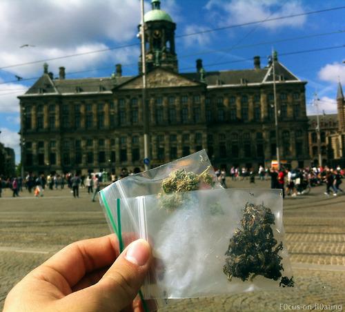Purple Haze & White Widow   |    Amsterdam Dam Square