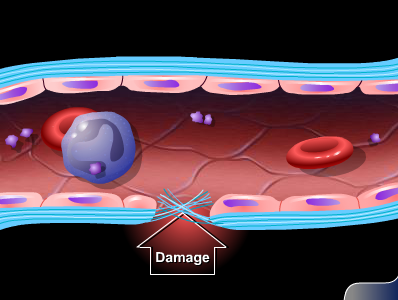 mcgraw hill animation mechanism of steroid hormone action
