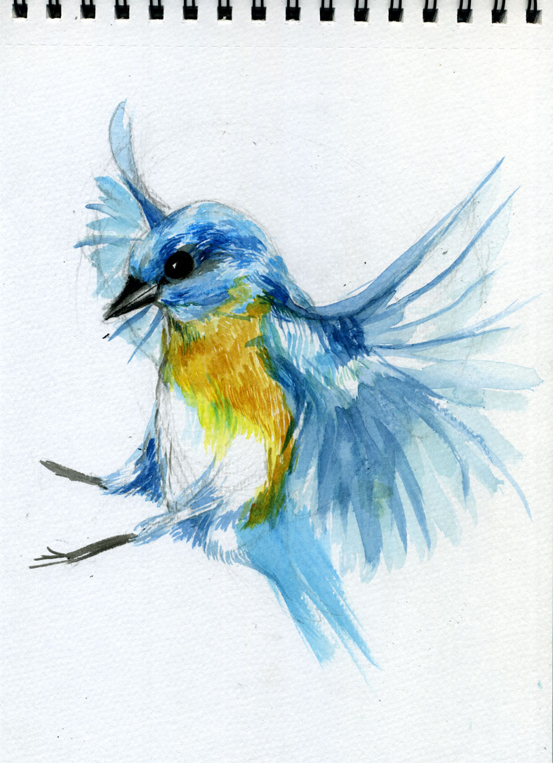 Bird—sketch: Watercolour, Brush And Ink
