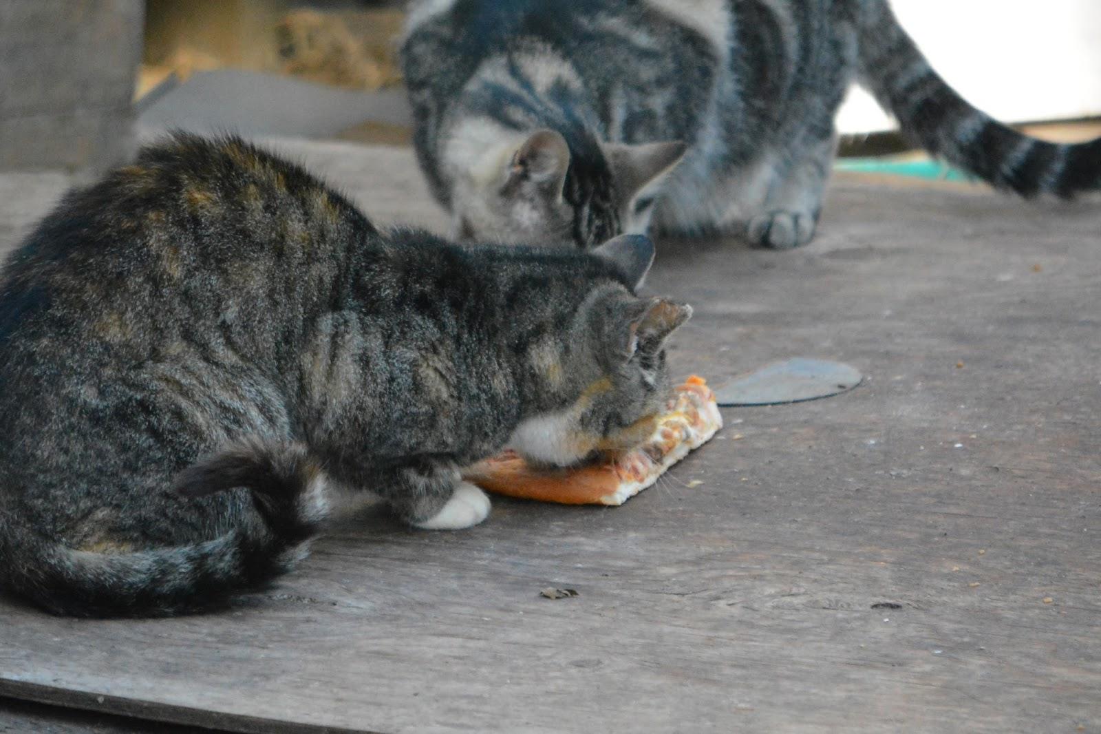soft e collar for cats