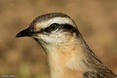 Mi lista de aves observadas en Argentina