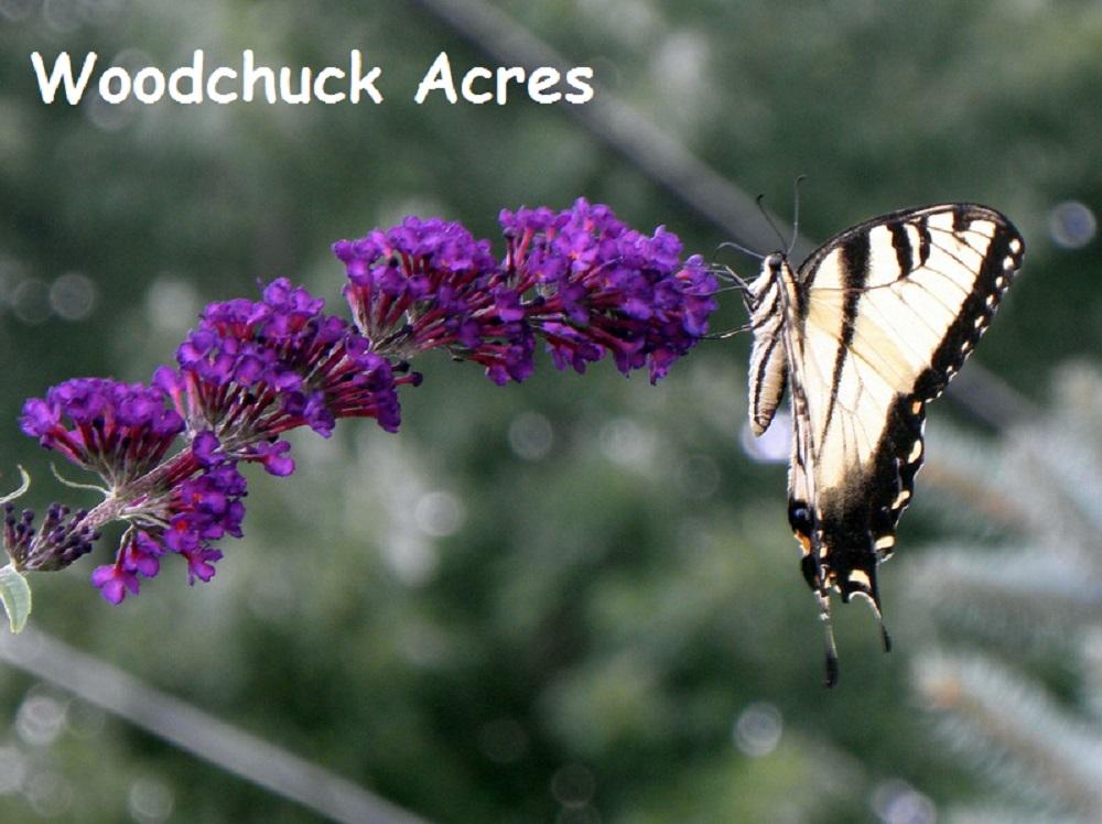 Woodchuck Acres