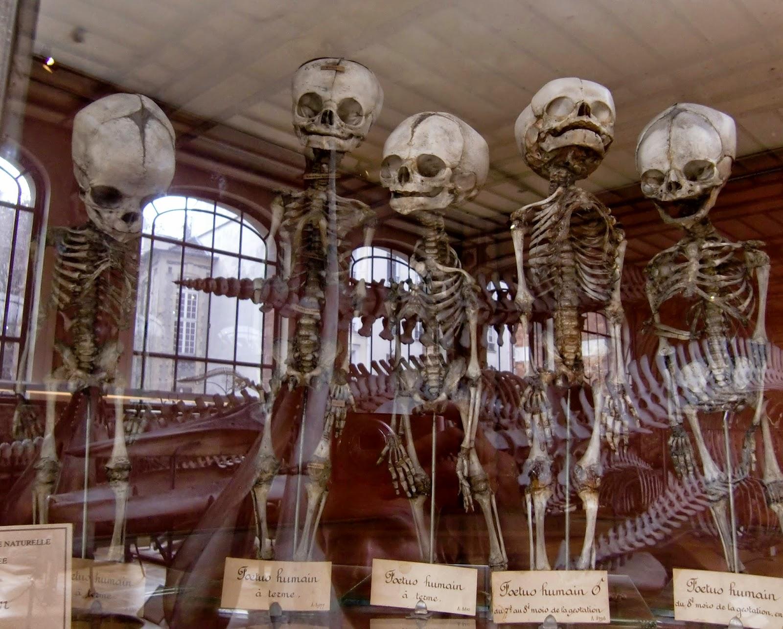 Lyginamoji anatomija