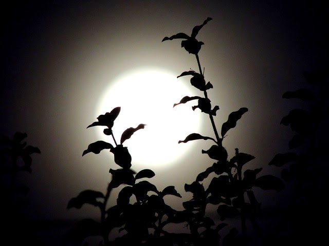 luna di notte come sfondo