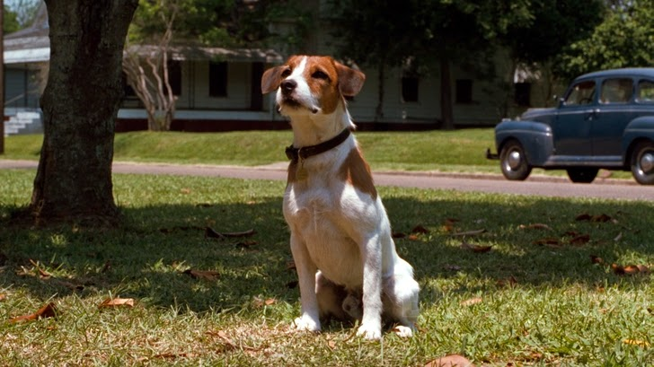 My Dog Skip (Mi perro Skip)
