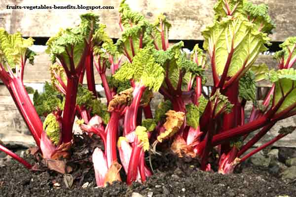 most healthy fruits is rhubarb a fruit or vegetable