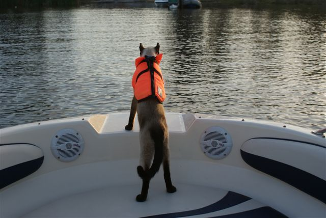 Can Cats Live On Boats