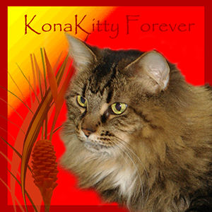 R.I.P. Kona Kitty