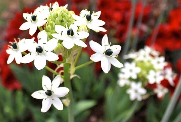El jardinero plantas y flores las plantas que necesitan for Jardines que necesitan poca agua