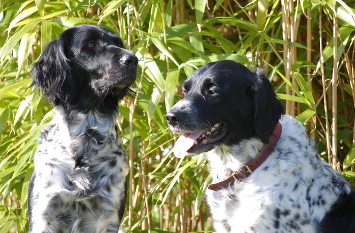 All List Of Different Dogs Breeds Types Of Dogs With