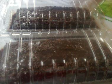 Cake Chocolate Moist