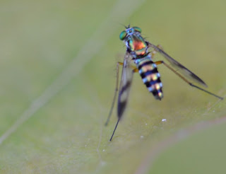 maco-photography-fly.jpg